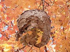 Kolonia os: gniazdo na masę papierową