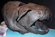 Данклеостеус , гигантский бронированный артродир позднего девона. До 6 метров в длину он жил во внутренних морях Северной Америки.