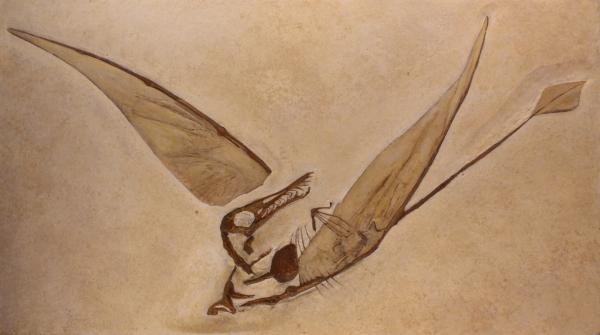 Rhamphorhynchus, Naturhistorisches Museum von Brüssel.