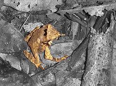 Frosch auf obigem Foto hervorgehoben