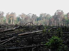 Een ontbost gebied