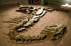 Yangchuanosaurus shangyouensis im Wissenschaftsmuseum von Hongkong.