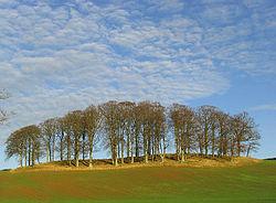 Ein kleiner Bestand (Gruppe) von Hartholzbäumen.