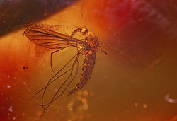 Een mug in barnsteen