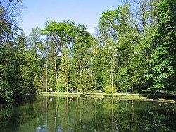 Bäume um einen See