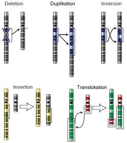 Mutacje chromosomowe