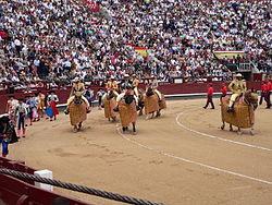 Wstępna procesja corridy, z trzema zespołami byków.