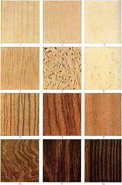 Różne drzewa tworzą różne rodzaje drewna: 1. Sosna 2. Buk zwyczajny 3. Sycamore 4. Dąb 5. Brzoza 6. Klon cukrowy 7. Mikroberlinia 8. Afrykański drzewo różanecznika 9. Okoumé 10. Orzech włoski 11. Brazylijski drzewo różanecznik 12. Heban