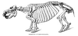 Kresba kostry hrocha