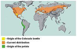 Inheemse verspreidingsgebieden van de coloradokever en de aardappel