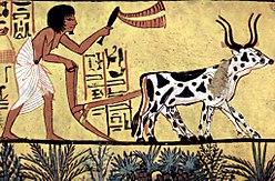 Фермерское хозяйство в Древнем Египте
