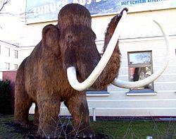 Ein Modell eines Mammuts - ein behaarter Elefant, der im gefrorenen Norden lebte. Das letzte Mammut starb vor etwa 4.500 Jahren.
