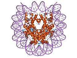 DNA na zewnątrz, wijący się wokół histonów wewnątrz. Widok od góry przez oś helikalną