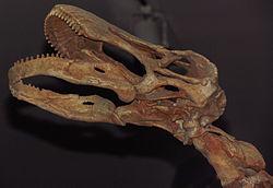 Gegoten schedel, Royal Ontario Museum