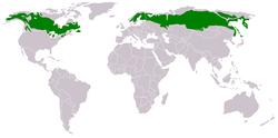 De taiga is te vinden op de hoge noordelijke breedtegraden, net onder de toendra, en net boven de steppen