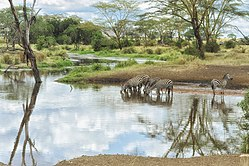 Strona nr 156: Park Narodowy Serengeti, przykładowy obiekt dziedzictwa naturalnego