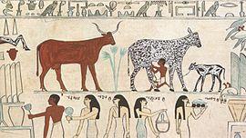 Rinder im alten Ägypten