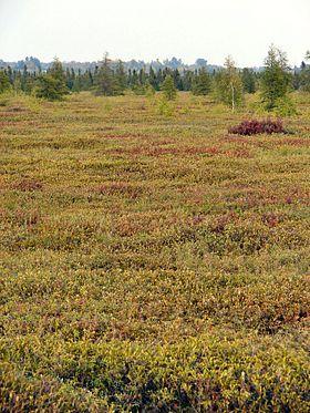 Mer Bleue Bog, een typisch veenmoeras, in oostelijk Ontario
