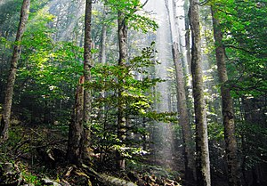 Beukenbos in het Nationaal Park Biogradska Gora, Montenegro