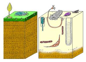 Foi assim que o fundo do mar mudou durante o período Cambriano.