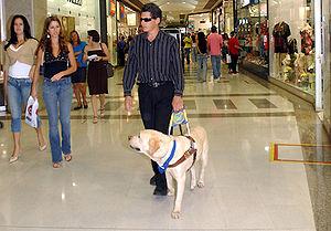 Ein blinder Mann in einem Einkaufszentrum wird von einem Blindenhund geführt.