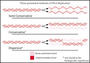 Povzetek treh predlaganih metod sinteze DNK