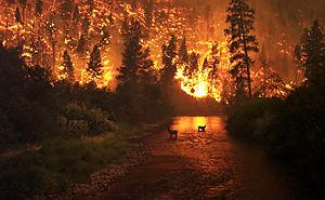 Een bosbrand in het Bitterroot National Forest, Montana