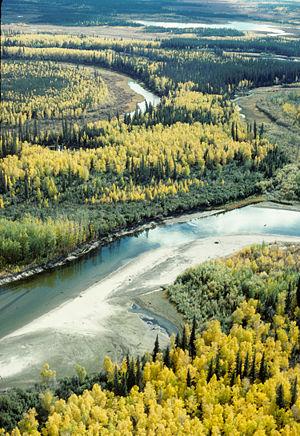 Luchtfoto van gemengd espen-sparrenbos in Alaska