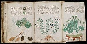 O manuscrito de Voynich, escrito em vellum