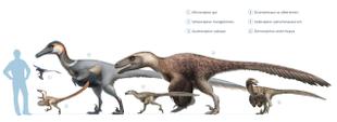Größenvergleich vieler Dromaeosaurier, einer Familie von vollständig gefiederten Dinosauriern, zu der sowohl Velociraptor als auch Deinonychus gehören.