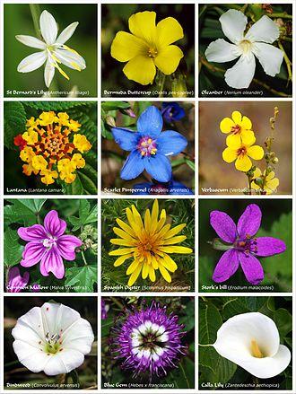 Ein Poster mit einem Blumenstrauss aus Blüten von zwölf Arten von Blütenpflanzen aus verschiedenen Familien
