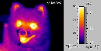 Bild eines Hundes im mittleren Infrarot