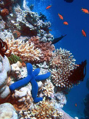Korallenriffe sind ein hochproduktives marines Ökosystem.