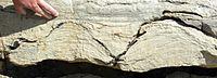 Stromatolieten (Pika Formatie, Midden-Cambrisch) bij Helen Lake, Banff National Park, Canada.