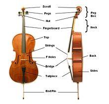 De onderdelen van een cello