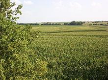 Graangewassen op voormalig grasland