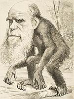 Toen het Darwinisme in de jaren 1870 werd geaccepteerd, symboliseerden karikaturen van Charles Darwin met een apenlichaam de evolutie.