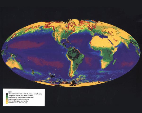 Wereldwijde vegetatiekaart. De donkerste plekken zijn regenwoud