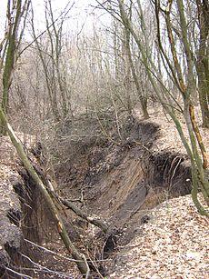Erosie heeft de grond uit dit bos verwijderd.