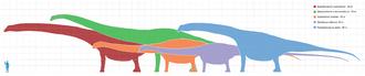 Größenunterschiede der größten Sauropoden im Vergleich zu einem Menschen
