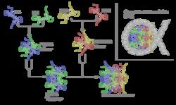 Składanie histonów w nukleosom