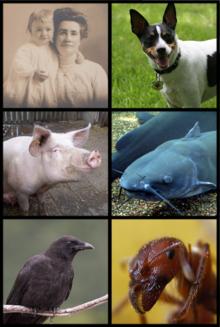 Beispiele von Allesfressern. Von links nach rechts: Mensch, Hund, Schwein, Wels, Krähe, Fleischameise