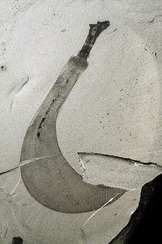 バージェス頁岩に豊富に生息する軟体動物のオットーイア