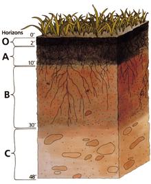 Bodenhorizonte werden durch kombinierte biologische, chemische und physikalische Effekte verursacht