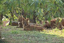 Gaten die rusten in een dierentuin in India