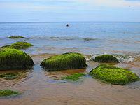 Chlorofyten omvatten zowel soorten die in de zee leven als veel soorten die in zoet water leven.