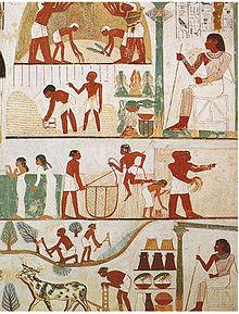 Ein Grabrelief zeigt Arbeiter beim Pflügen der Felder, bei der Ernte und beim Dreschen des Getreides unter der Leitung eines Aufsehers.