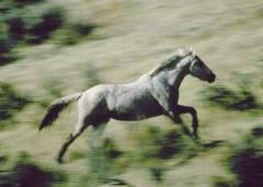 Un cheval sauvage (un mustang américain) dans le Wyoming, États-Unis